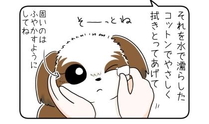 犬の目やにを水で濡らしたコットンでやさしく拭き取ってあげて。固いのはふやかすようにしてね。そーっとね