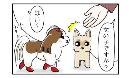 女の子ですか?とうちの犬に手を伸ばす。その手に向かう犬を見て驚くヨーキー