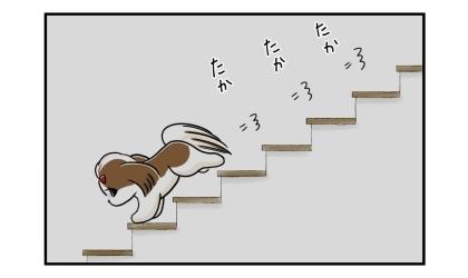 犬が階段を下りていく