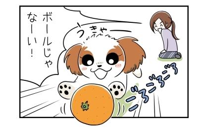 犬が突然みかんを転がして遊びだした。ボールじゃなーい!