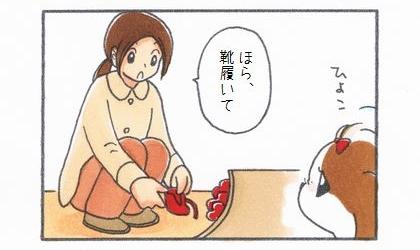 犬が玄関にやってきた。ほら、靴履いて。