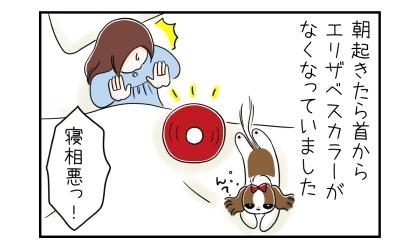 エリザベスカラーを付けて寝た犬、朝起きたら首からエリザベスカラーがなくなっていました。寝相が悪い!