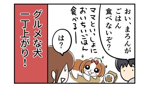 おい、犬がご飯食べないぞ?ママと一緒においしいご飯食べるー。グルメな犬一丁上がり!
