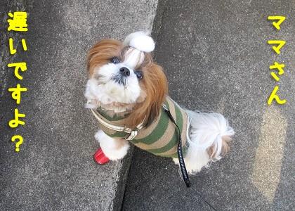 お外の階段とシーズー犬まろん