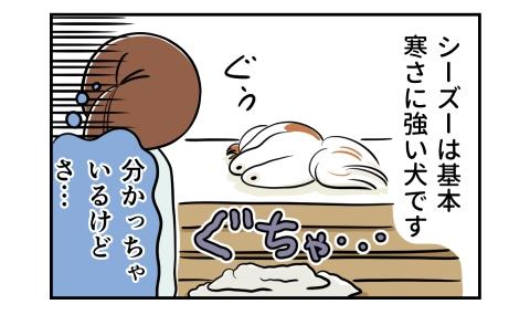 シーズーは基本寒さに強い犬です。犬に蹴り捨てられた毛布。分かっちゃいるけどさ…