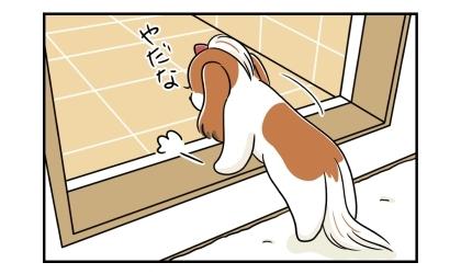 シャンプーやだな、と言いながら浴室ドアをまたぐ犬