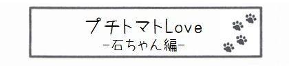 プチトマトLove -石ちゃん編--0