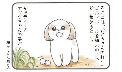 きょうのわんこ大賞グランプリにシー・ズー♪-3