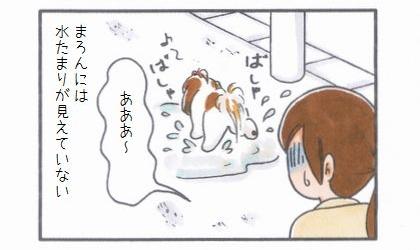 雨上がりのお散歩-4