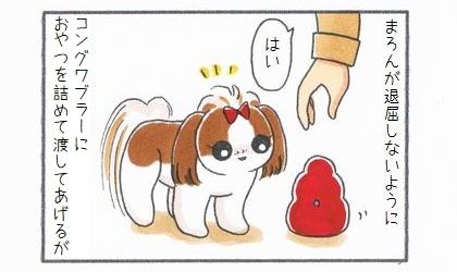犬が退屈しないように、コングワブラーにおやつを詰めて渡してあげるが