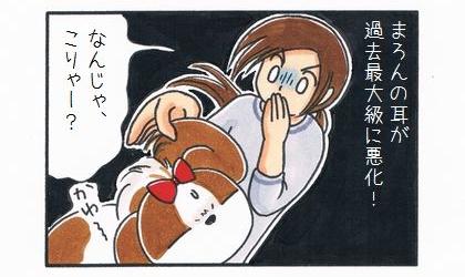 犬の耳が過去最大級に悪化!犬の耳をめくって見ながら、なんじゃ、こりゃー?