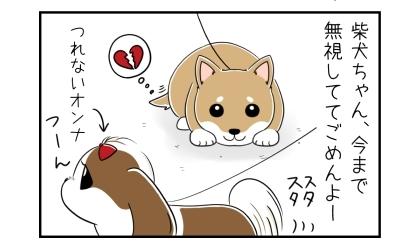 柴犬ちゃん、今まで無視してごめんよー。つれないオンナのうちの犬