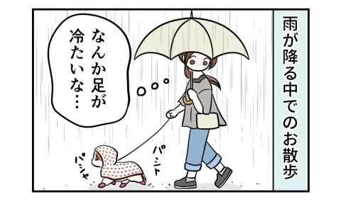 雨が降る中での犬のお散歩。なんか足が冷たいな…