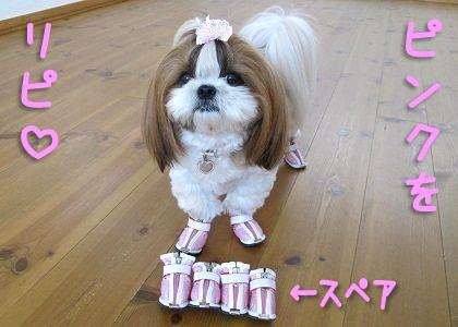 ピンクの犬靴とシーズー犬まろん
