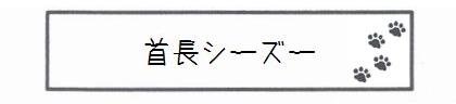 首長シーズー-0