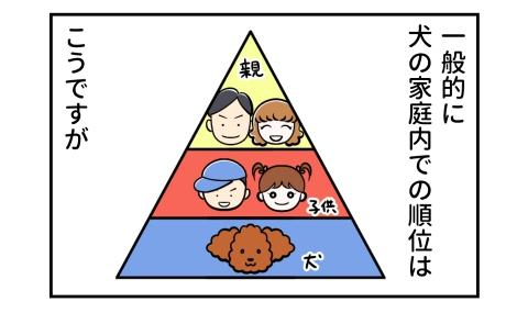 一般的に犬の家庭内での順位は、1位:親、2位:子供、3位:犬、ですが