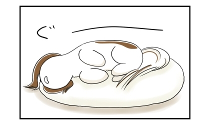 犬がビーズクッションの上でぐっすりと寝ている