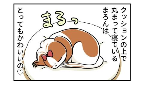 クッションの上で丸まって寝ている犬は、とってもかわいいの。まるっ