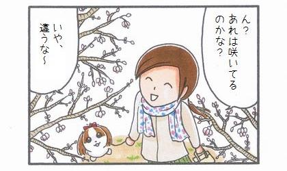 桜の開花確認-2