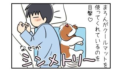 犬がクールマットを使ってくれているのを目撃。夫と犬と背中合わせに寝ていた。なぜかシンメトリー