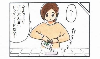 試供品のドッグフード-2