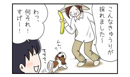 おばけきゅうりを収穫して、こんなきゅうりが採れました~と犬と夫に報告。わっ、何それ!そげー!