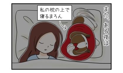 エリザベスカラーを付けた犬、飼い主の枕の腕で寝る