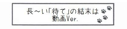 長~い「待て」の結末は 動画Ver.-0