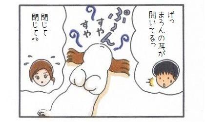 外耳炎のお話☆臭いの元は…-4