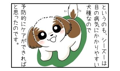 というのも、シーズーは目の病気にかかりやすい犬種なので、予防的にケアできればと思ったのです
