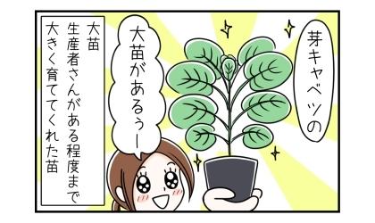 芽キャベツの大苗があるー(大苗:生産者さんがある程度まで大きく育ててくれた苗)
