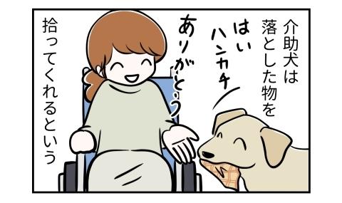 介助犬は落とした物を拾ってくれるという。はいハンカチ、ハンカチを拾う犬。ありがとう、車椅子の人