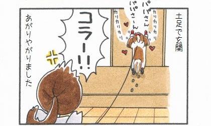 犬が土足で玄関上がりやがりました。リビングのドアを早く開けろとカリカリする犬。コラー!怒る飼い主