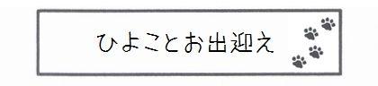 ひよことお出迎え-0