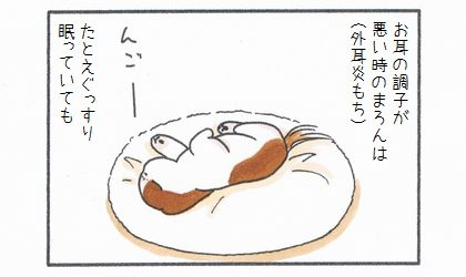 お耳の調子が悪い時の犬は(外耳炎もち)、たとえぐっすり眠っていても