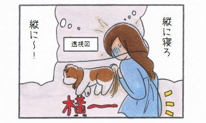 縦に寝ろ、縦に~!犬が横になって寝ているので自分が布団からはみ出してしまう