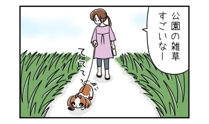 犬と公園に散歩に行った。ボーボーの雑草を見て、公園の雑草すごいなー