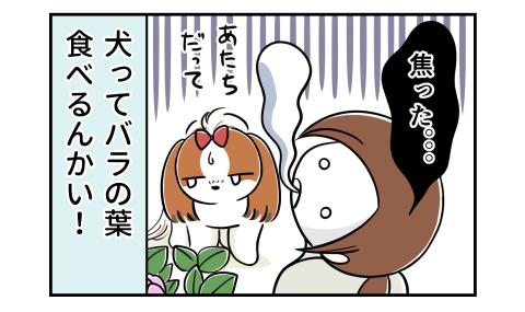 焦った。犬ってバラの葉食べるんかい!