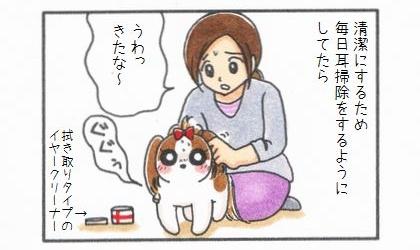 犬の耳を清潔にするため、毎日拭き取りタイプのイヤークリーナーで耳掃除をするようにしていたら