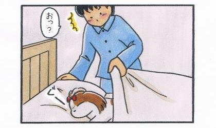 夫が寝ようと布団をめくったら、犬が寝ているのを見て驚く