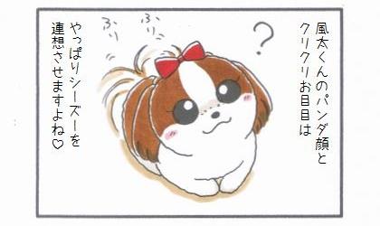 レッサーパンダの風太くん-3