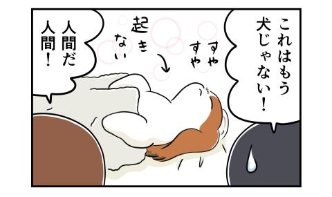 すやすやと寝る犬を見て、これはもう犬じゃない!人間だ人間!