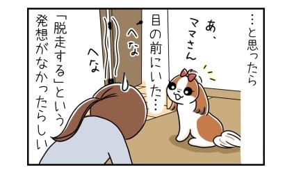…と思ったら、犬は目の前にいた…。「脱走する」という発想がなかったらしい