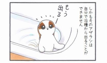浴槽のアザラシ-3
