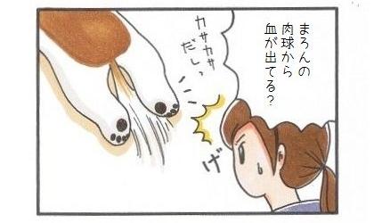 犬靴下に再挑戦!!-1