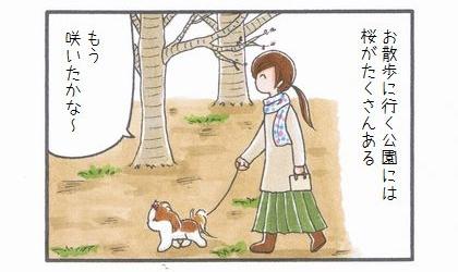 桜の開花確認-1