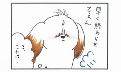 オールド・イングリッシュ・シープドッグ-2