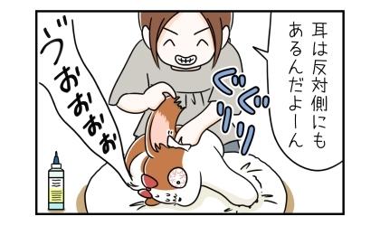 耳は反対側にもあるんだよーん、犬の左耳を掃除する飼い主。唸る犬