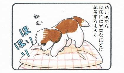 幼い頃から寝床には異常なほどに執着する犬。眠いとクッションをほりほり