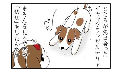 ところが先日会ったジャックラッセルテリアも、うちの犬を見るや否や伏せをしたんです